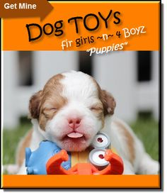 Dog Toys Dog Store