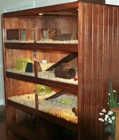 DIY Guinea Pig Cages. Please share if you like this. :)