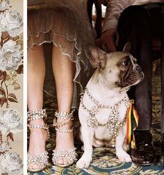 dog with rhinestones