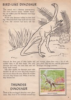 Now here's another properly old one (at long last) - a compendium of extinct animal 'stamps' from the Cold War world of 1954. Why put 'stamp...