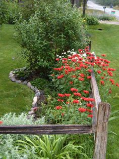 RED bee Balm~Landscaping ideas too