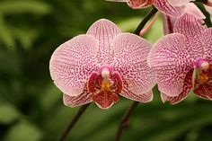 Orchid Repotting & Dividing