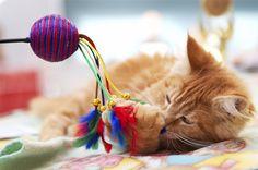 Los mejores juguetes para gatos