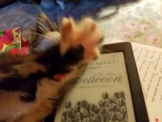 My reader, Melinda's, little Zorya wants private time with Cady and Coert. Clearly she knows they're animal lovers! HA!