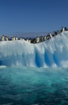 Pinguinoak