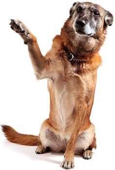 CARE for  Reactive  Dogs : CARE  stands for Counterconditioning and Positive Reinforcement (R+) are Essential for reactive dogs