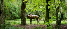 Nestled in the mystical woodlands of Te Popo are 17 bronze statues waiting to be discovered. Bring the kids on an African Safari animal hunt. Safari Animals, African Safari, Kids Events, Crocodile, Statues, Mystic, Giraffe, Waiting, Lion