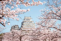 Himeji Castle in cherry blossom season by Ke Wei Tsai on Himeji Castle, Cherry Blossom Season, Clouds, Seasons, World, Travel, Outdoor, Castles, Architecture