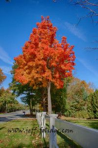 A maple tree all in it red and orange fall foliage colors in the quiet corner of Connecticut. #autumn