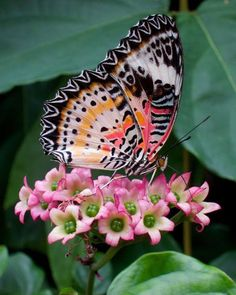 √ 6 Different Types of Butterflies - Photo Composition İdeas Beautiful Bugs, Beautiful Butterflies, Beautiful Flowers, Beautiful Pictures, Types Of Butterflies, Flying Flowers, Butterflies Flying, Butterfly Kisses, Butterfly Wings