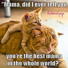 1120 Best Cat Memes Images In 2019 Funny Animals Funny