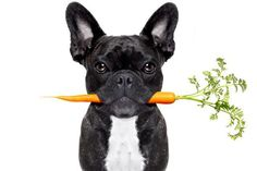 """Where to find advice on nutrition and exercise for your dog… What our dogs eat and how much activity they get is a lot like the doctors recommend for us humans. If you have noticed pet food advertising, you will see more emphasis on """"natural,"""" """"organic"""" and """"gluten-free"""" products for dogs. Exercise for your dog will al"""