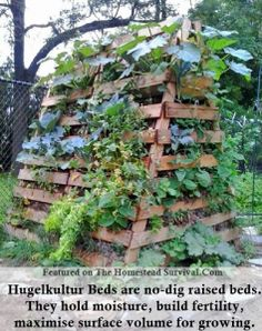 "Hugelkultur raised garden beds are a permaculture method that uses layering of rotten wood, organic compost and soil to create a garden bed that is highly water retentive making it an ideal growing system for drought stricken areas. As organic materials break down it creates it's own self feeding fertilizer under the Hugelkultur garden beds.  You build a vertical Hugelkultur garden bed from reclaimed wood pallets like the picture above. Be sure to look for a ""HT"" stamped on wood pallets meaning they were heat treated NOT chemically treated."