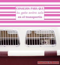 No solo no te costará nada meter a tu gato en el trasportín, 😼con estos trucos, ¡¡¡entrará competamente solo!!! 😁