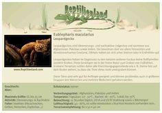 Leopardgecko - kompakte Übersicht der Haltungsbedingungen. Unsere Karteikarten können auch zum Beschriften von Terrarien verwendet werden. Ausführliche Haltungsinformationen gibt es auf www.reptilienland.com