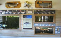 The Dillon Nature Center in Hutchinson, Kansas is a hundred acre park with a wild arboretum, geese covered pound and a square foot Visitor Center. Exhibit Design, Nature Center, Kansas, Fish, Display, Frame, Home Decor, Floor Space, Picture Frame