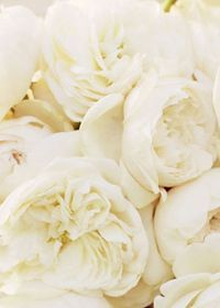 ivory - another good wedding color?