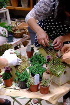 workshop - making a succulent roof for your birdhouse