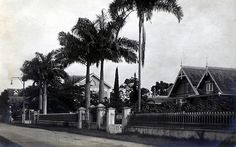 Palm Lined Street, Trinidad Palm Lines, Auld Lang Syne, West Indian, The Good Old Days, Historical Fiction, Far Away, Trinidad And Tobago, Caribbean, Explore