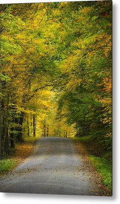 Tunnel Of Trees Rural Landscape Metal Print by Christina Rollo.  All metal prints are professionally printed, packaged, and shipped within 3 - 4 business days and delivered ready-to-hang on your wall. Choose from multiple sizes and mounting options.