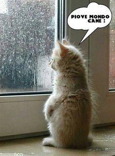 Gattolandia Onlus per la tutela del gatto Fb