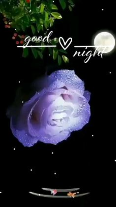 Beautiful Good Night Images, Cute Good Night, Good Night Gif, Good Night Quotes, Beautiful Sunset, Beautiful Roses, Sweet Good Night Messages, Good Night Sweet Dreams, Good Morning Nature