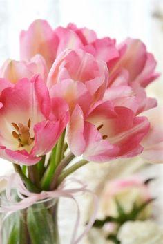 #Tulip #bouquet.... #Spring