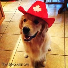 1000 Images About Holiday Golden Retrievers On Pinterest