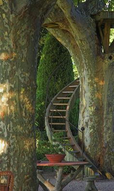 Stairway to the trees in Provence, France