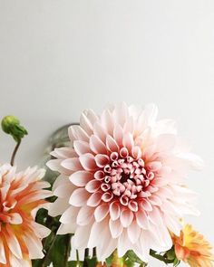 Dahlias | Bing Bang NYC