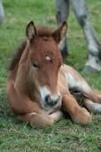 Pics of cute baby horses. Pics of cute baby horses. Cute Baby Horses, Cute Baby Animals, Cute Babies, Animal Babies, Small Animals, Wild Animals, Farm Animals, Baby Animals Pictures, Cute Animal Pictures