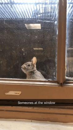 Baby bunny got stuck in Window Well knocked on window for help