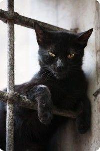 Fotos de gatos negros                                                                                                                                                                                 Más