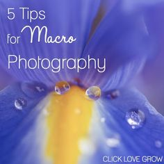 Macro Photography Macro photography is extreme close up photography, that allows you to reproduce very small objects at 1:1 ratio minimum… which is very fun, and reveals a beautiful wo…