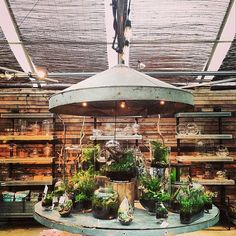 Green to combat gray skies, courtesy of a visit from @Patrick Hallett-Morley #terrariums #regram