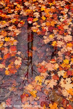 "-""Leaves of Glass - Brian Donovan Fine Art Landscape Photography""  - Colour Photography  - A photo that is very colourful and catches your attention/ uses colour to create a mood. - The colours in this picture are very joyous and happy because they are warm colours."