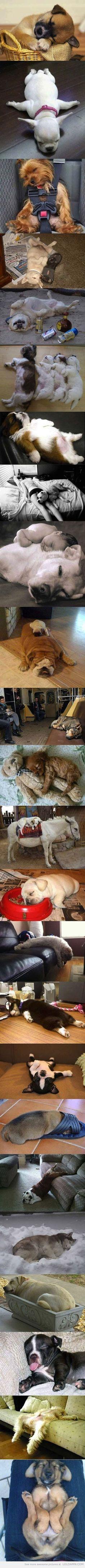 TGIF – Lazy Dogs