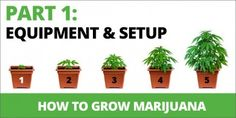 How To Grow Marijuana: Step 1. Equipment & Set Up