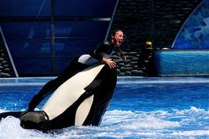 Dawn Brancheau performing with an unidentified orca