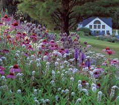 Whiteflower farm's butterfly magnet collection, $119 -- for the side yard, near vegetable beds?   Includes three plants each of Echinacea purpurea 'Ruby Giant', Asclepias tuberosa Gay Butterflies Mixture, and Liatris spicata 'Kobold'; one plant each of Monarda 'Raspberry Wine' and Phlox paniculata 'David'. Eleven plants total, shipped with planting plans.
