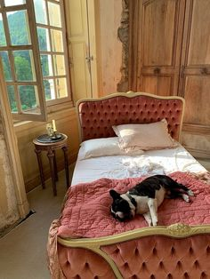The Château Animals — Château de Gudanes Chateau De Gudanes, Pigeon House, French Friend, Cat Traps, Two Dogs, Poses For Photos, Snuggles, Animal Rescue, Cuddling