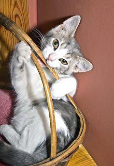 ✯ Playful Kitten