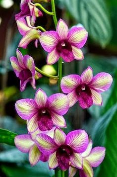 Randam Color Orchid