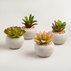 Potted with gravel and nestled in shapely cement pots, our quartet of lifelike mini succulents cheers up windowsills and other surfaces in an assortment of styles and colors.