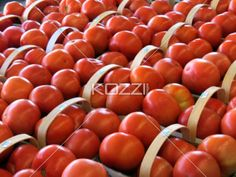 Fresh tomatoes in rows of baskets at the farmers market.