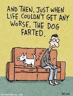 The Dog Farted, Funny Quote, Hi KU!