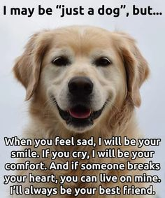 Best dog quotes ever: 47 best images about kind of dogs i like! I Love Dogs, Puppy Love, Cute Dogs, Awesome Dogs, Feeling Sad, How Are You Feeling, Best Dog Quotes, Pet Quotes, Puppy Quotes