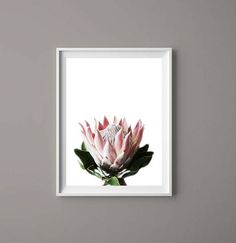 Protea Wild Flower Printable Wall Art Digital Print