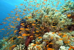 The Great Barrier Reef was recognised by UNESCO as a World Heritage Area in 1981 and is the largest World Heritage Area in the world covering over 350,000 square kilometres.