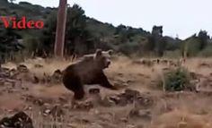 Καστοριά: Έβγαλε το σκύλο βόλτα και έπεσε πάνω σε αρκούδες! [video]